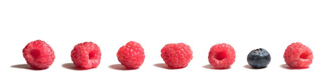 Blueberry among Raspberries. Blueberry in a line of raspberries royalty free stock image