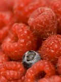 Blueberry and Raspberries Royalty Free Stock Photography