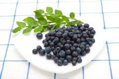 Blueberry on a saucer Royalty Free Stock Photos