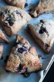 Blueberry Scones Stock Image