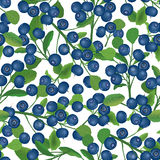 Blueberry seamless background. Ripe red cranberries with leaves. Vector illustration. Stock Image
