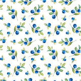 Blueberry seamless pattern. Beautiful watercolor seamless pattern with bilberry twigs and fresh berries on white background Royalty Free Stock Image