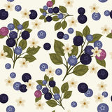 Blueberry seamless pattern. Seamless pattern with branches of blueberries, green leaves  and white flowers on light gray background Stock Photography