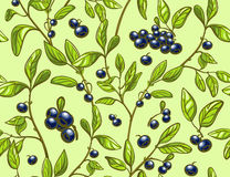 Blueberry seamless pattern. Full color blueberry branches and berries light green background. Perfect for agriculture themes design, farmers market, package Royalty Free Stock Images