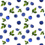 Blueberry seamless pattern by hand drawing on white backgrounds. Illustrations Royalty Free Stock Image