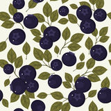 Blueberry seamless pattern. Seamless pattern. Vector blueberries and green leaves on light gray background Stock Images