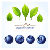 Blueberry set Stock Photos