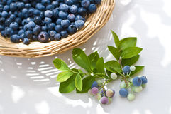Blueberry, Stock Photography