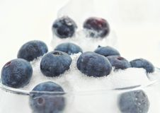 Blueberry in the snow. Delicious and fresh blueberries in the snow Royalty Free Stock Photo