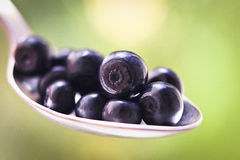 Blueberry Spoon Eating Close Royalty Free Stock Photo