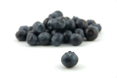 Blueberry stand out Royalty Free Stock Photos