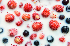 Blueberry and strawberry mix Royalty Free Stock Photography