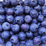 Blueberry, summer fruit, close up. Great bilberry texture for background. Vegan raw food, healthy lifestyle, vitamins stock photography