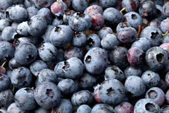 Blueberry. Stock Photo