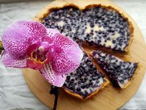 Blueberry tart Stock Images