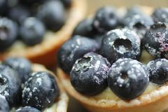 Blueberry tarts Stock Photo