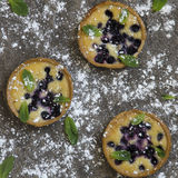 Blueberry tarts Stock Images