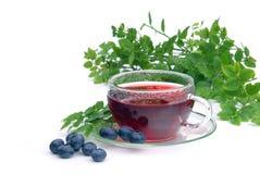 Blueberry tea. Herbal or fruit blueberry tea Stock Photo