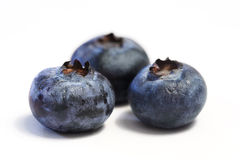Blueberry Trio Macro. Macro of three blueberries, shot on white Stock Photography