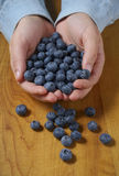 Blueberry tumble from hands Royalty Free Stock Photography