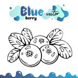 Blueberry vector illustration, berries images. Isolated blueberry vector illustration for menu, package design. Sketch. Blueberry berries images. Isolated Stock Image