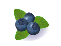 Blueberry. Vector illustration of the blueberries with the green leaves Royalty Free Stock Image