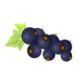 Blueberry, vector Royalty Free Stock Images