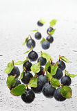 Blueberry with water drops Stock Images