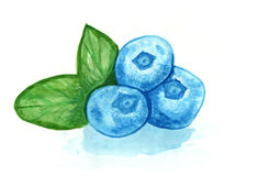 Blueberry watercolor hand drawn illustration Stock Images