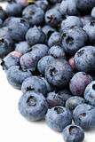 Blueberry. Royalty Free Stock Photography