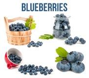 Blueberry. On white background Stock Image