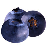 Blueberry on white background. Isolated blueberries. Blueberries isolated on white background as package design element. Healthy eating stock photos