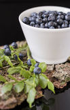 Blueberry in white bowl on bark with moss, Royalty Free Stock Photos