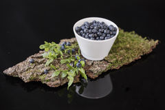 Blueberry in white bowl on bark with moss, Royalty Free Stock Photo