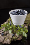 Blueberry in white bowl on bark with moss Royalty Free Stock Photo