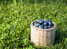 Blueberry and in wicker box Stock Image