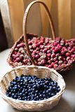 Blueberry and wild berry in a basket Stock Image