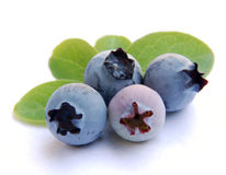 Free Blueberry With Leaves Stock Photography - 10171702