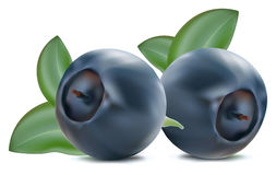 Free Blueberry With Leaves Stock Image - 14543281