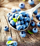 Blueberry on wooden background Royalty Free Stock Image