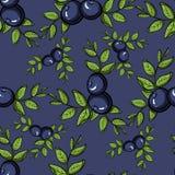 BlueberryPattern3 Стоковое Изображение