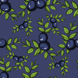 BlueberryPattern3 Stock Image