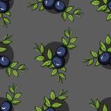 BlueberryPattern Stock Photography