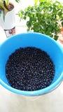 Blueberrys στοκ φωτογραφία με δικαίωμα ελεύθερης χρήσης