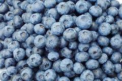 Blueberrys fotografia stock