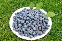 Blueberrys Stockfoto