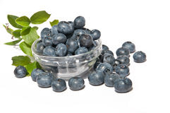 Blueberrys in a bowl. Blueberries (lat. Vaccinium Myrtillus) in a bowl with green leaves as decoration royalty free stock image