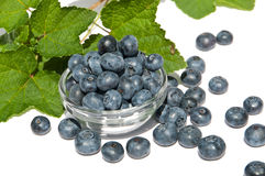Blueberrys in a bowl. Blueberries (lat. Vaccinium Myrtillus) in a bowl with green leaves as decoration stock images
