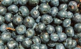 Blueberrys. Close up image of some blueberrys Stock Photo