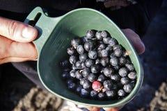 Blueberrys dans une cuvette Photo libre de droits